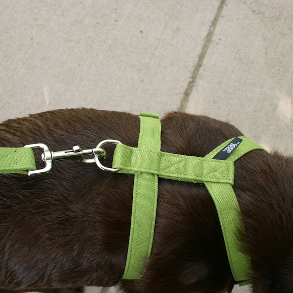 EarthHero - Basic Hemp Canvas Harness 2