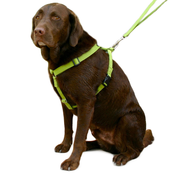 EarthHero - Basic Hemp Canvas Dog Harness - Green - Small (Chest: 14 - 25 in.)