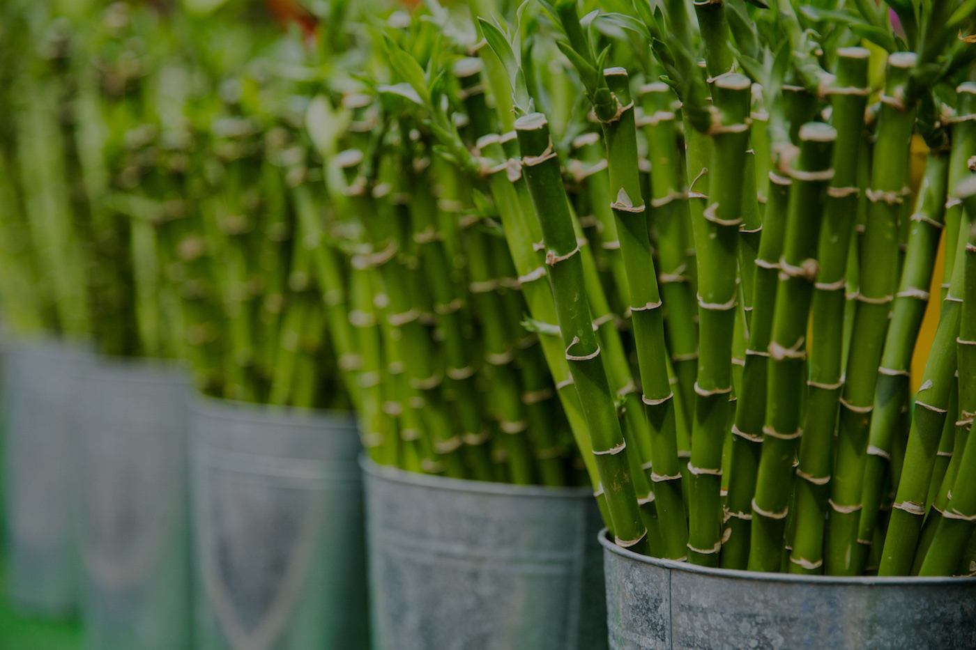 When is Bamboo Sustainable?