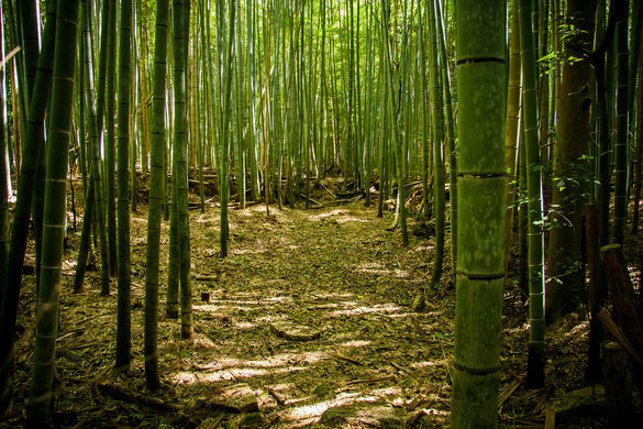 is-bamboo-sustainable-forest