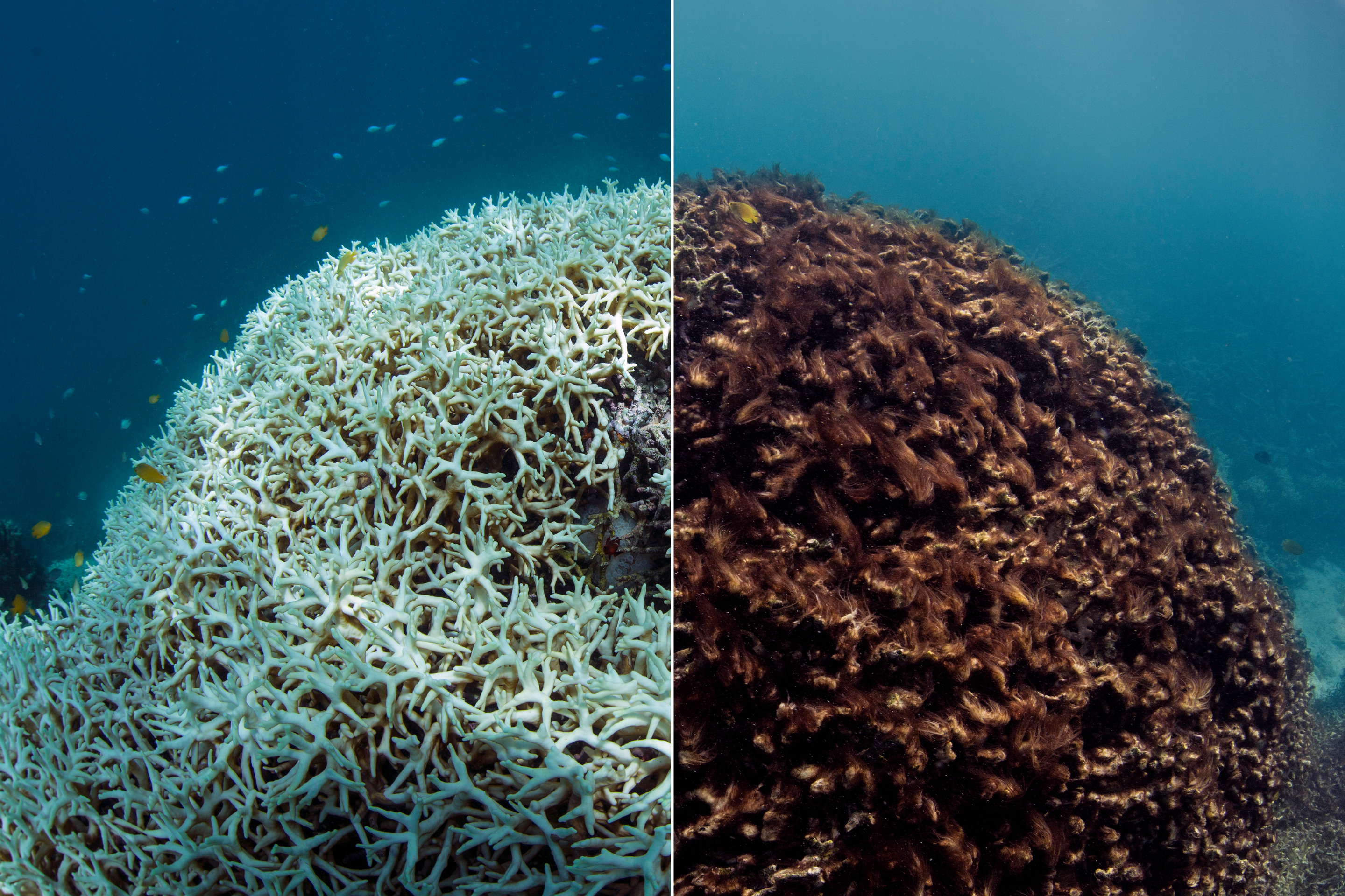 natural-sunscreen-coral-reef-bleaching earthhero