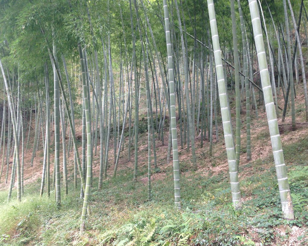 Brush with Bamboo | Compostable toothbrushes | EarthHero