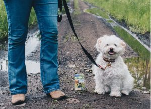 7 Eco-Friendly Pet Products | EarthHero