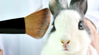 What does cruelty free mean?