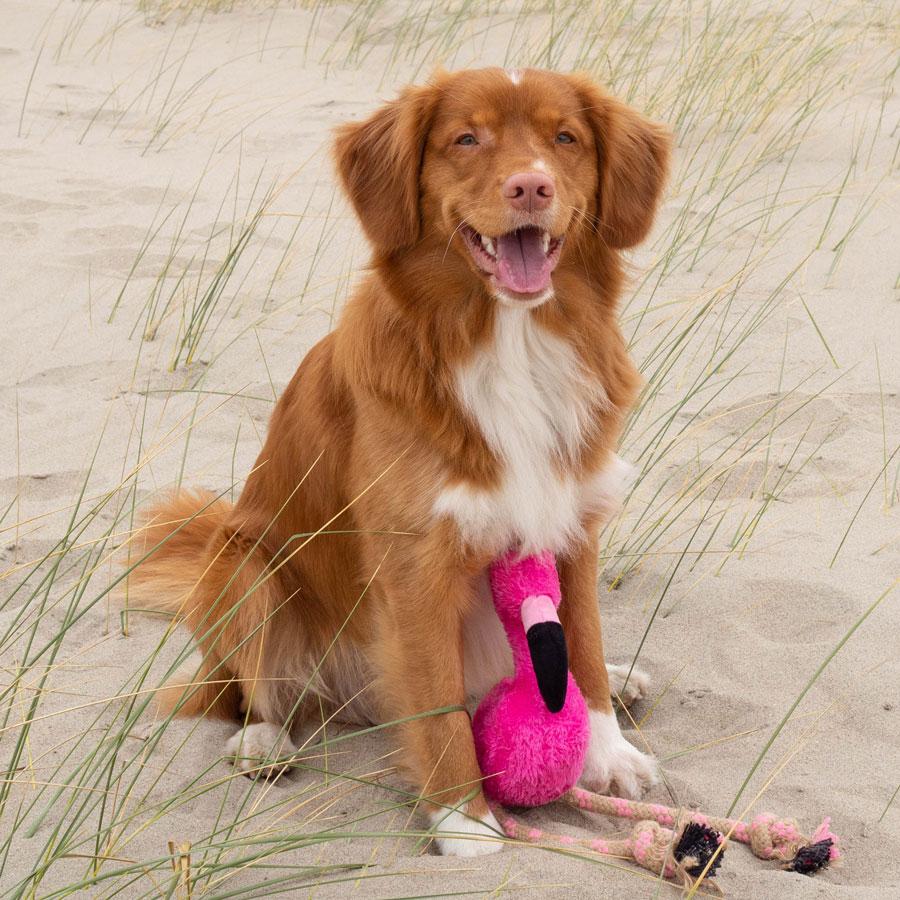 EarthHero - Flamingo Plush Rope Dog Toy 2
