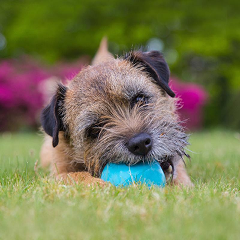 EarthHero - Natural Rubber Dog Treat Ball 4