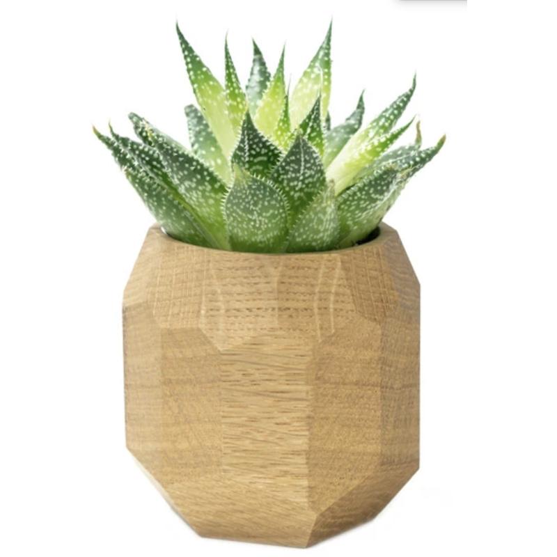 EarthHero - Oak Geometric Wooden Planter - 1