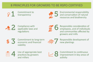 sustainable palm oil, palm oil, EarthHero, RSPO, eco-friendly