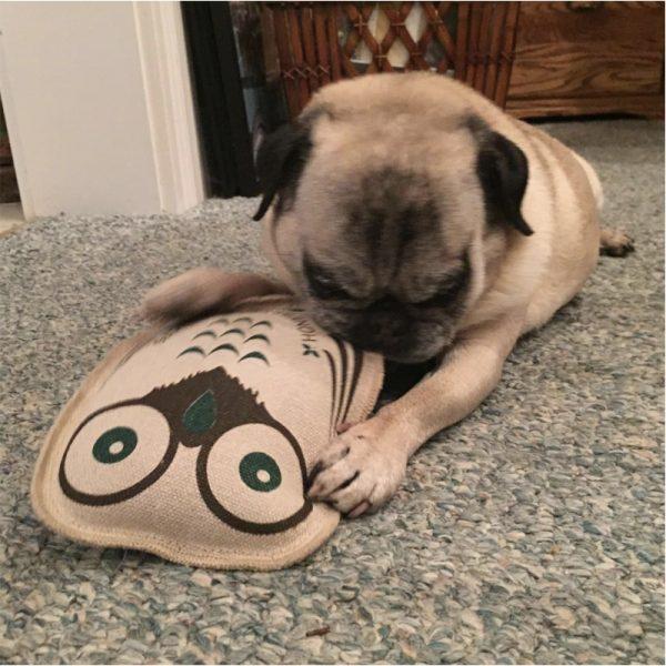 EarthHero - Eco Owl Buddy Dog Toy - 2
