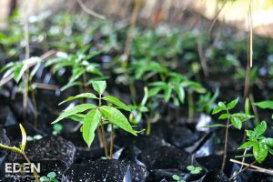 Eden Reforestation Projects EarthHero