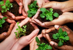 Regional Differences in Sustainability | EarthHero Blog
