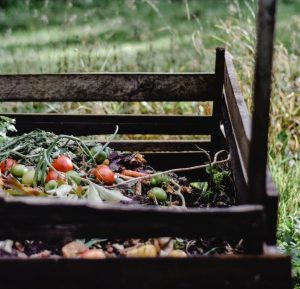 How To Start a Compost Pile in Your Backyard | EarthHero Blog