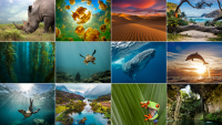 Non-Profit Spotlight: Plastic Oceans