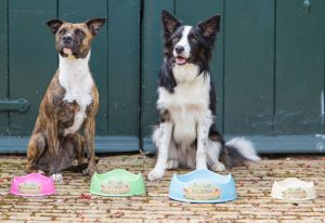 The rise of the conscious dog owner | Beco Pets | EarthHero Blog